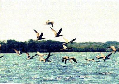 20.000 millones de aves migratorias, afectadas por el cambio climático